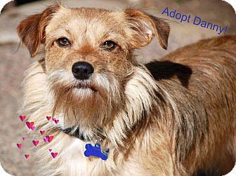 Terrier (Unknown Type, Small) Mix Dog for adoption in Concord, California - Danny