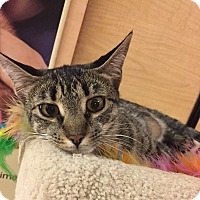 Adopt A Pet :: Sylvie - Jackson, NJ
