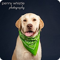 Adopt A Pet :: Toohey - Coppell, TX