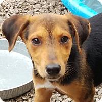 Adopt A Pet :: Minuette - ST LOUIS, MO