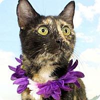 Adopt A Pet :: Chickadee - Harrisonburg, VA
