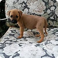 Adopt A Pet :: BUG - ROCKMART, GA