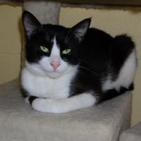 Adopt A Pet :: Duchess - Dothan, AL