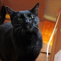 Adopt A Pet :: Beau - Toronto, ON