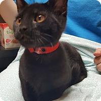 Adopt A Pet :: Robin - Reston, VA