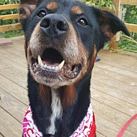 Adopt A Pet :: Kylee - Hillsboro, NH