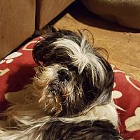 Adopt A Pet :: Fido - Conway, AR