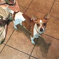 Adopt A Pet :: Kapu - Houston, TX