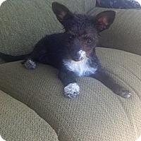 Adopt A Pet :: Pia - Oceanside, CA