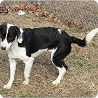 Adopt A Pet :: Sylvia - Alexandria, VA
