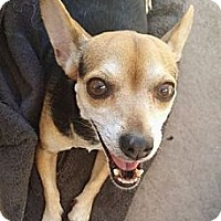 Adopt A Pet :: COOKIE - Inland Empire, CA