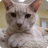Adopt A Pet :: Dusty - Lake Charles, LA