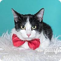Adopt A Pet :: Dakota - Houston, TX