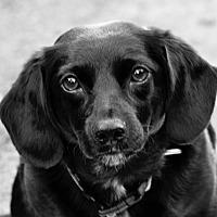Adopt A Pet :: Sammie - Seattle c/o Kingston 98346/ Washington State, WA