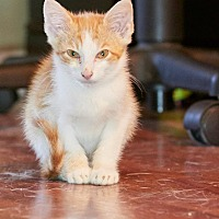 Adopt A Pet :: Sweet Cheeks - Marietta, GA