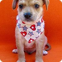 Adopt A Pet :: Greg - Irvine, CA