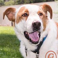 Adopt A Pet :: Jake - Fort Lupton, CO
