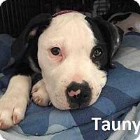 Adopt A Pet :: Taunya - Lake Forest, CA