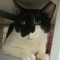 Adopt A Pet :: Sheldon - Muscatine, IA