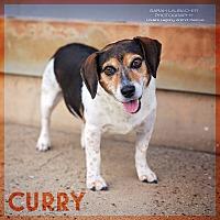 Adopt A Pet :: Curry - Cincinnati, OH