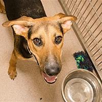 Adopt A Pet :: Renee - Birmingham, AL
