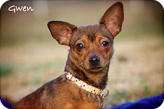 Chihuahua Mix Dog for adoption in Wilmington, Delaware - Gwen