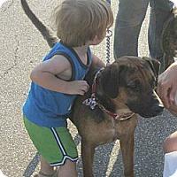 Adopt A Pet :: Tres - Cincinnati, OH