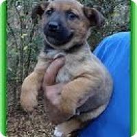 Adopt A Pet :: Posey - Staunton, VA