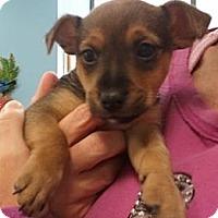 Adopt A Pet :: Sherman - Encinitas, CA