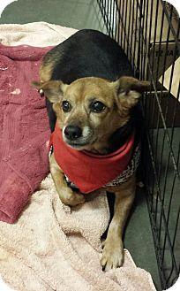 Beagle Mix Dog for adoption in Alexis, North Carolina - Abby