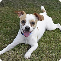Adopt A Pet :: Andy - Knoxville, TN