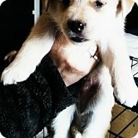 Adopt A Pet :: Sailor - Treton, ON