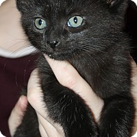 Adopt A Pet :: Thunder-ADOPTED - Naperville, IL