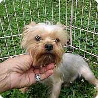Adopt A Pet :: Benny - Crump, TN