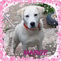 Adopt A Pet :: MARGE in Rhode Island - West Warwick, RI