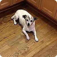 Adopt A Pet :: Penny - New Kensington, PA