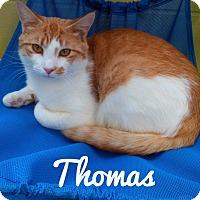 Adopt A Pet :: Thomas - Jackson, NJ