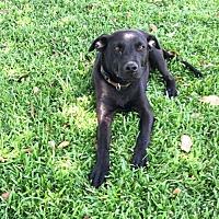 Adopt A Pet :: Lola - Mobile, AL