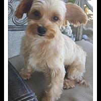 Adopt A Pet :: CHICKADEE - Winchester, CA