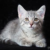 Adopt A Pet :: Kathleen - Nashville, TN