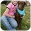 Photo 3 - Doberman Pinscher/Labrador Retriever Mix Dog for adoption in Marion, Arkansas - Hazel:FOSTER NEEDED