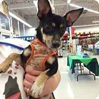 Adopt A Pet :: Jordan - Dallas, TX
