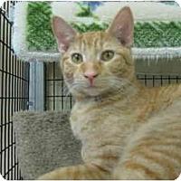 Adopt A Pet :: Patrón - Deerfield Beach, FL