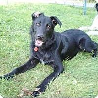 Adopt A Pet :: Taz - New Boston, NH