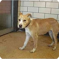 Adopt A Pet :: Lucky - Chicago, IL