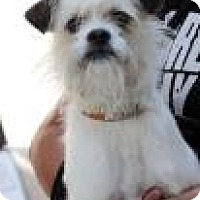 Adopt A Pet :: Gil - Phoenix, AZ