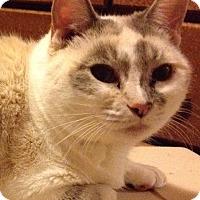 Adopt A Pet :: Violetta - Santa Rosa, CA