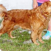 Adopt A Pet :: Aly - Murdock, FL
