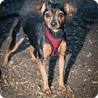 Adopt A Pet :: Charlie - New York, NY