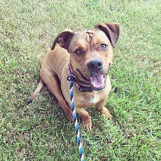 Basset Hound/Terrier (Unknown Type, Medium) Mix Dog for adoption in Lake Odessa, Michigan - Hobbes